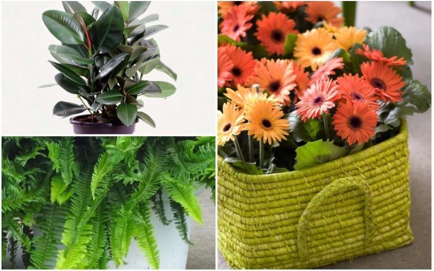 Top 11 cele mai sănătoase plante de apartament