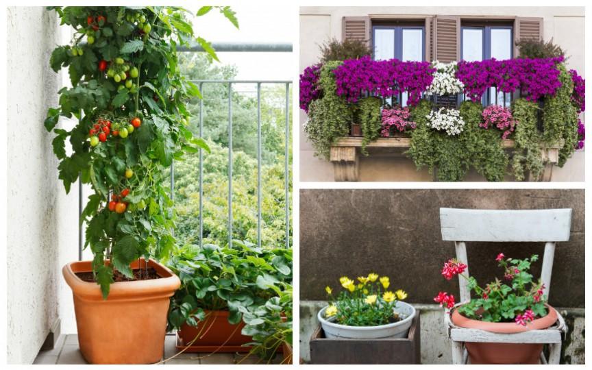 9 moduri originale să faci o grădină la balcon sau chiar în apartament