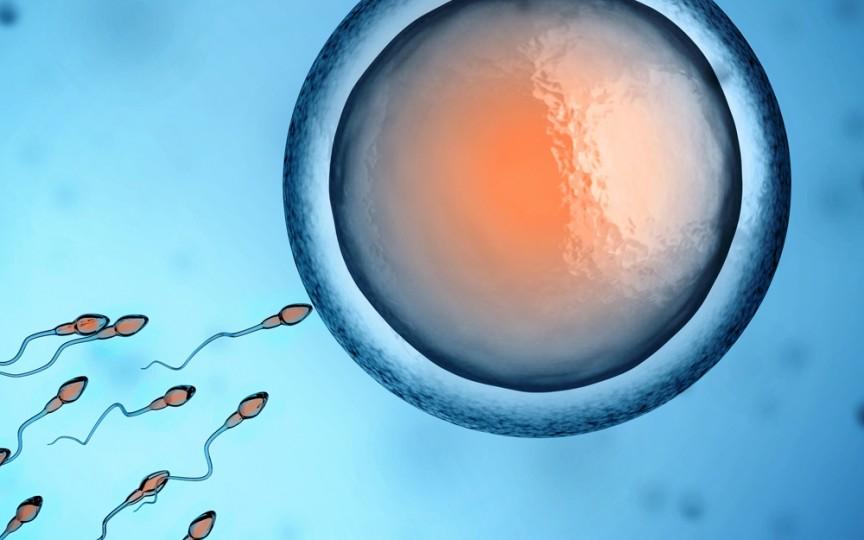 Riscurile pe care le poartă o procedură de fertilizare in vitro
