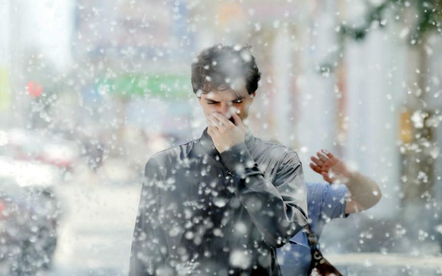 Puful de plopi – o pacoste pe capul celor cu alergii. Iată cum poți scăpa de chinuri!
