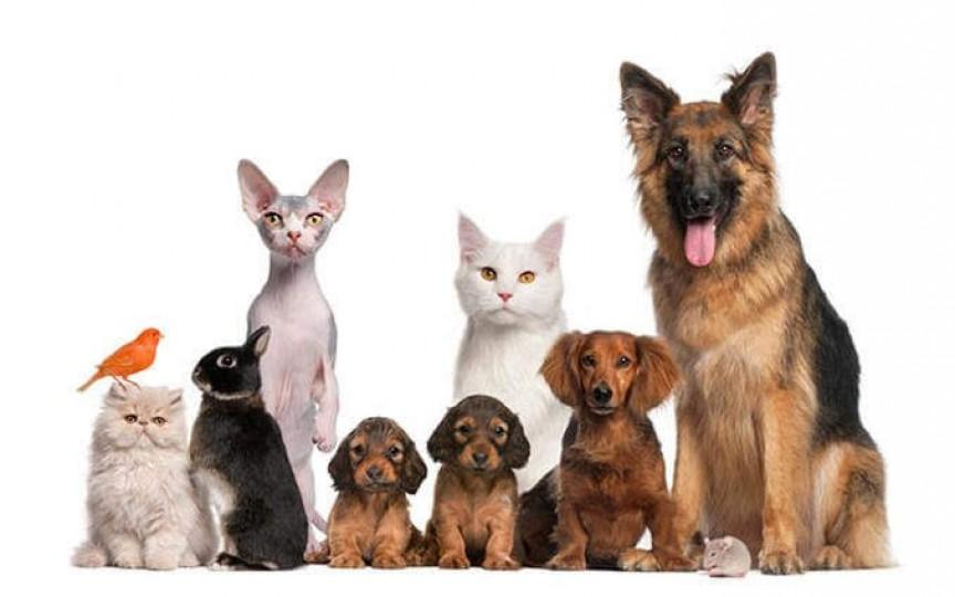 Animalele de companie: beneficii sau pericol pentru copii?