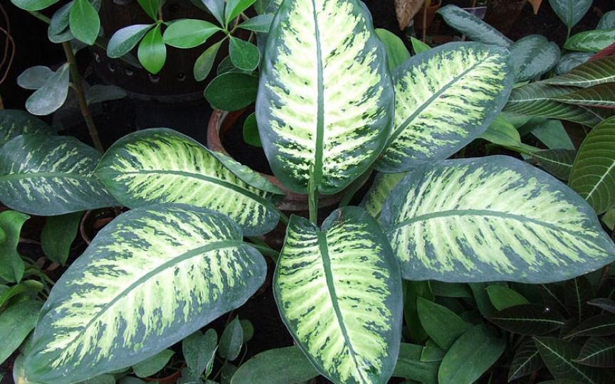 Ai această plantă în casă şi nu ştiai cât de periculoasă poate fi pentru copii