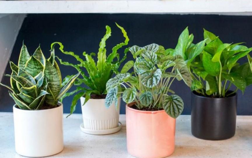 Plante care purifică aerul din casă