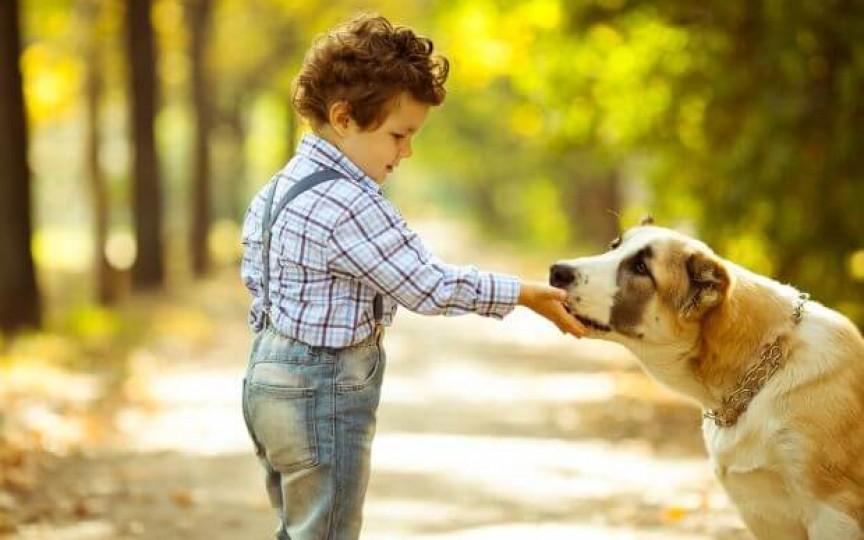 Personalitatea copilului născut în anul Câinelui