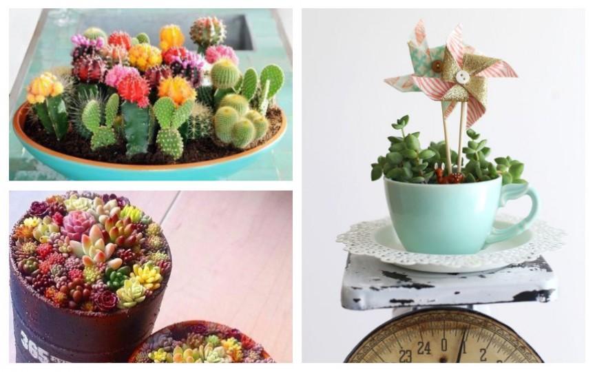 Vrei un decor deosebit în casă? Alege plantele suculente!