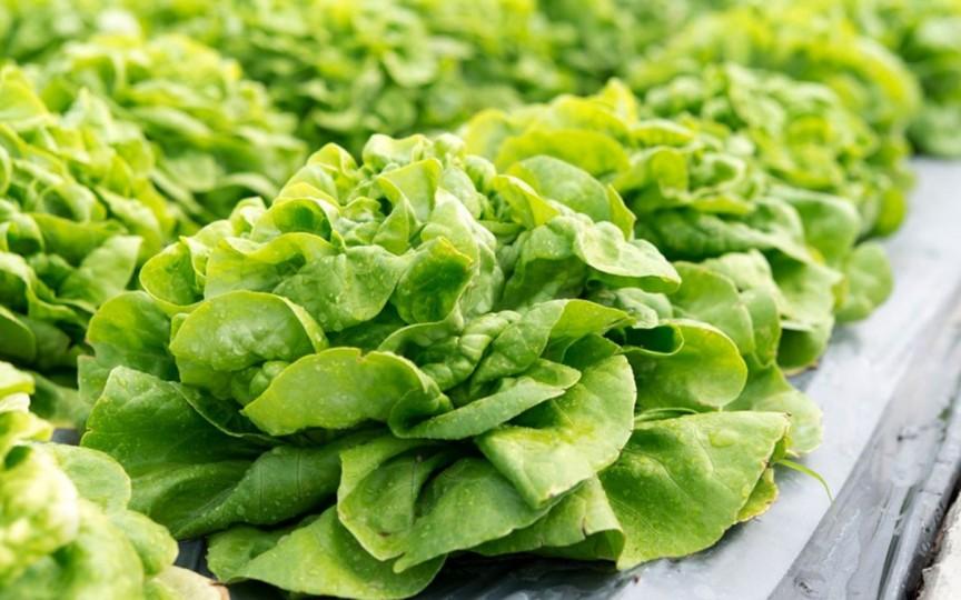 Ce beneficii are consumul de salată verde