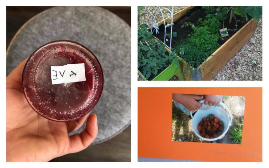 Copiii la grădiniță în Germania culeg fructe și pomușoare din care fac dulceață ajutați de educatoare