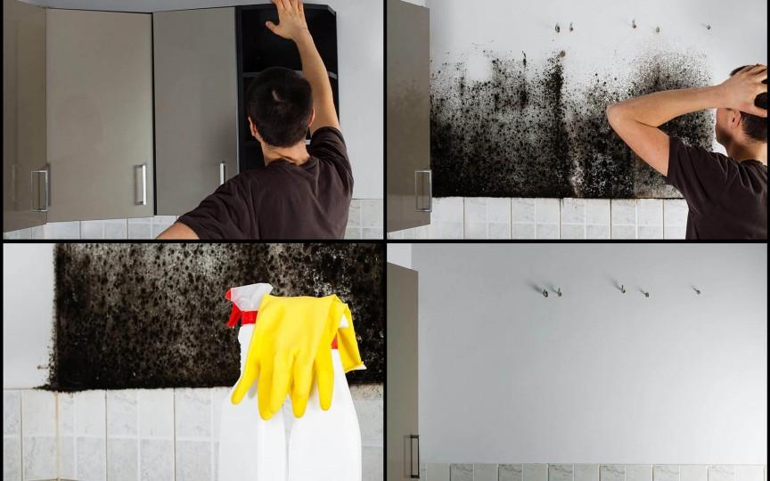 Mucegaiul din casă vă poate afecta sănătatea. Semne ce ar trebui să vă îngrijoreze