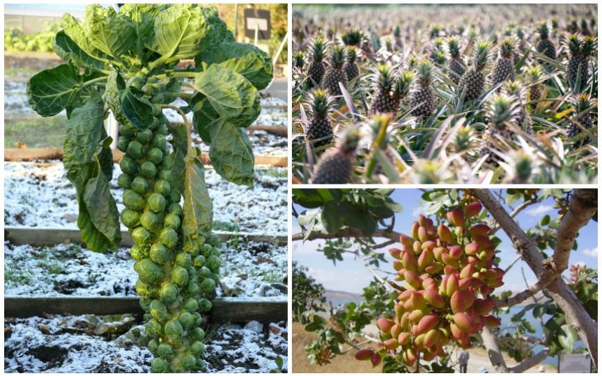Știai cum cresc fructele și legumele pe care le consumi zi de zi?