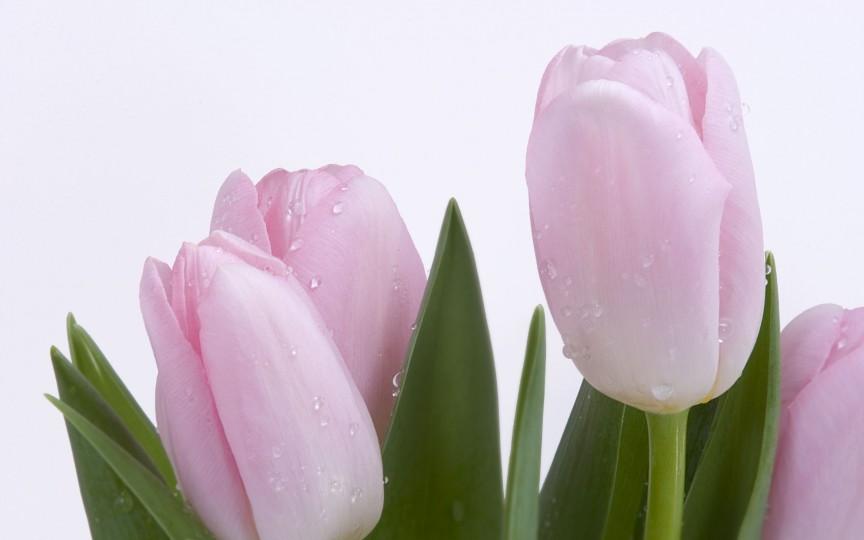Calendar onomastic pentru 14 martie. Iată ce sărbători sunt astăzi!