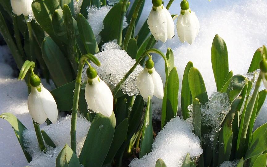Poezii despre primăvară pentru copilașii de grădiniță