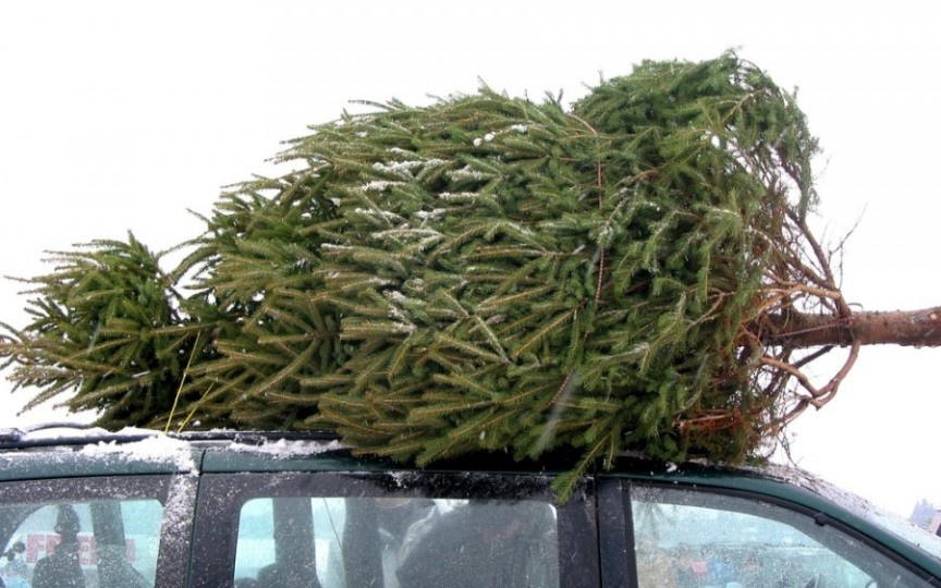Idei utile de refolosire a bradului de Crăciun după sărbători. Nu-l arunca la gunoi!