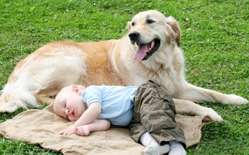 Ce se întâmplă dacă copilul înghite păr de animale?