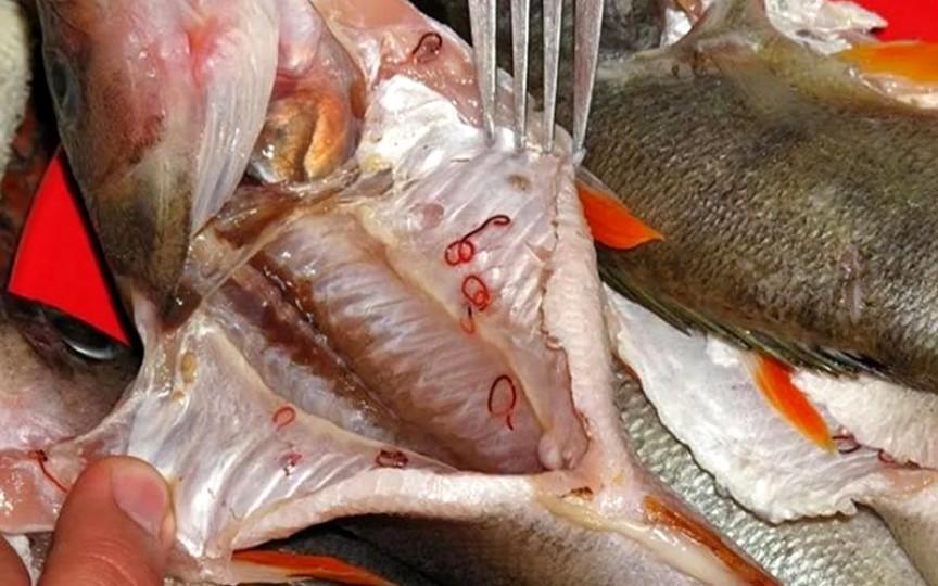 73 de loturi de pește congelat infestat cu paraziți ar fi ajuns pe piață, în spitale sau școli