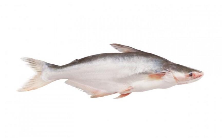 Peştele care ne distruge sănătatea. Îl consumi și tu?