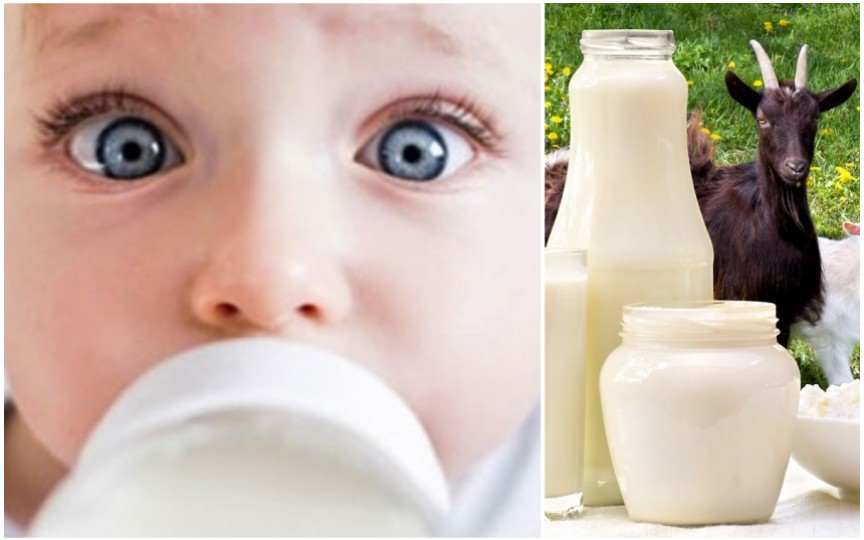 Alergologul Tatiana Gorelco: Înlocuirea laptelui de vacă cu cel de capră nu tratează alergia la copii!