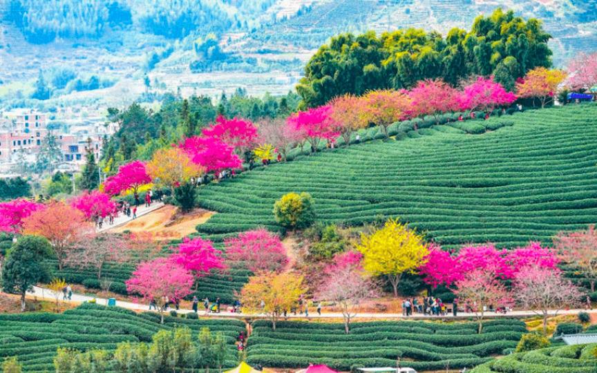 (FOTO) Copacii de cireș din China au înflorit, iar priveliștile sunt magice!