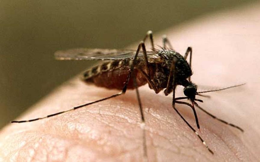 Trucuri pentru a evita mușcăturile de țânțari la copii