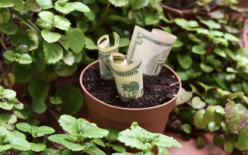Dacă vrei să ai mai mult noroc și bogăție, înfrumusețează-ți locuința cu aceste plante