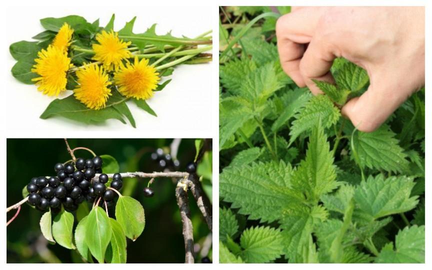 Top 5 plante care ajută la eliminarea toxinelor din organism