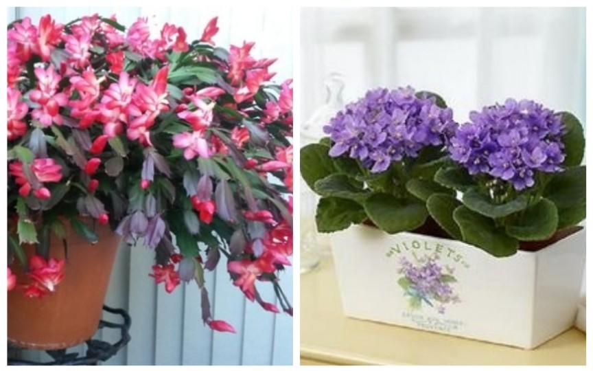 5 cele mai bune plante pentru camera copilului