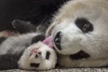 Imagini emoționante cu mame și copii